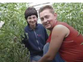 Вирощування помідорів для Іванни та Валерія – сімейна справа