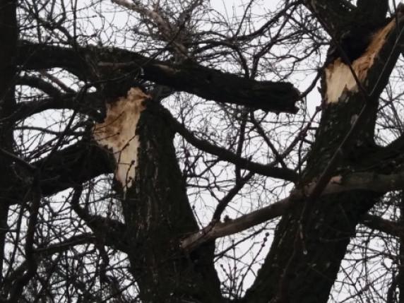 Повалені дерева та зірвана покрівля: що накоїла негода у Володимирі