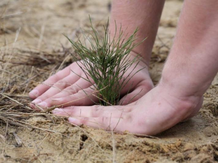 Працівники лісгоспу відновили на Володимирщині понад 220 гектарів насаджень