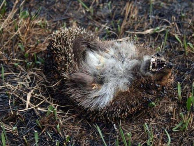 Це страшні наслідки пожеж в екосистемах