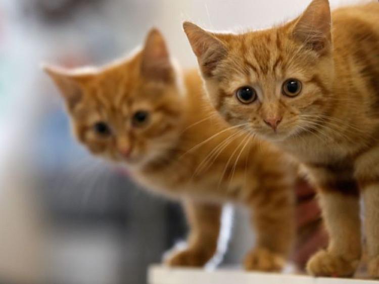У місті на Волині просять заборонити відловлювати та вбивати вуличних котів