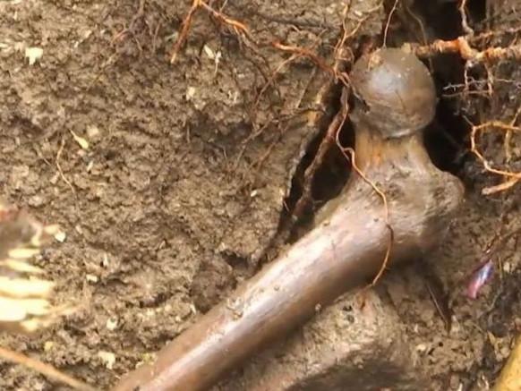 На Волині екскаваторщик випадково натрапив на людські рештки