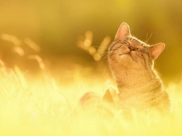 Сонячні обійми
