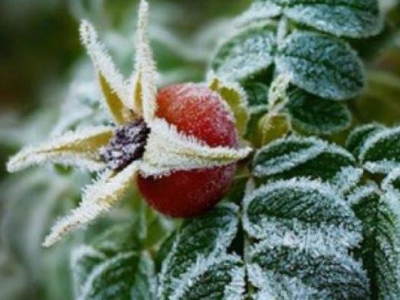 На вихідні синоптики прогнозують заморозки