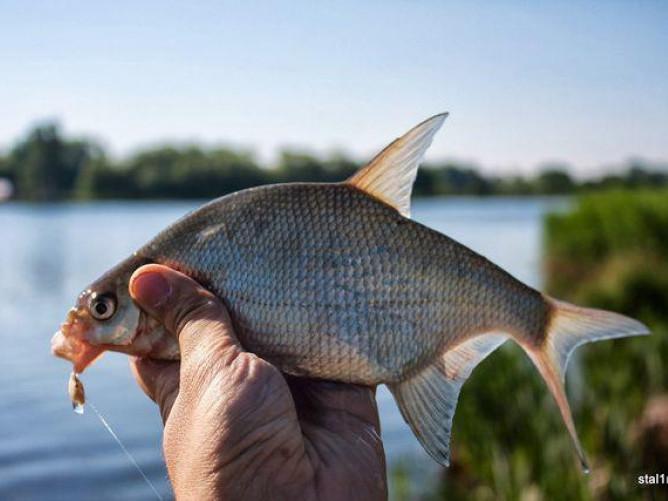 Повідомили, на яких річках Волині заборонили ловити рибу