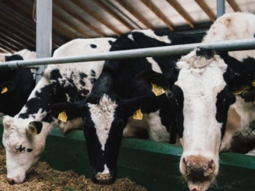 На Волині розповіли секрети галузі молочного виробництва