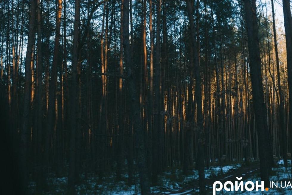 Ліси Володимир-Волинського лісгоспу