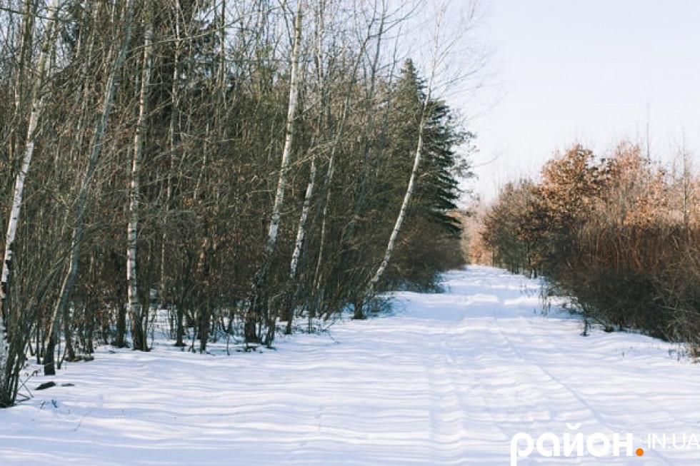 Ліс у Володимир-Волинському лісгоспі