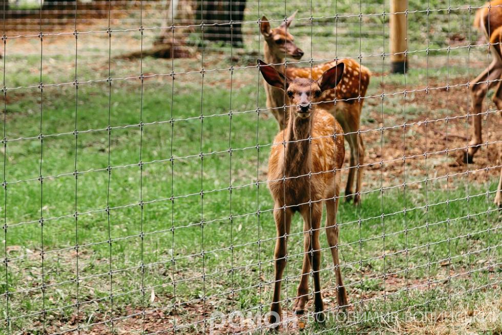 Малюки, які народились весною у Губинському лісництві